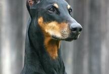 かっこいい犬