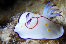 Nudibranchs forever / by Sandpaperdaisy Art