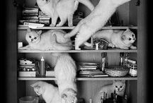Cats..;)