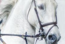 Onkel Eriks Heste :)