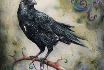 ravens and crows