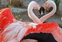 Animals-Feathered: Flamingos / I LOVE Flamingos! / by VickiandJoey Froelich