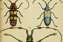 beetles / by Beckey Douglas