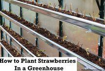 zahrada skleník