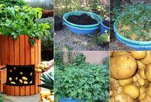 verdure idee strambe
