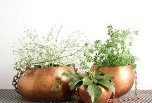 vasos plantas