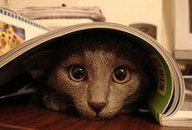 Cats' Eyes / by Debra Mikalauskas