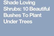 shadeloving bushes