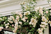 Flowers / Love. roses