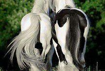 Horses :* <3