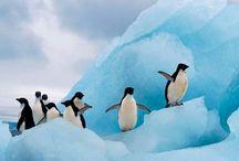 penguins / by Kathleen Lycett