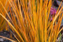 Orange plants for slope