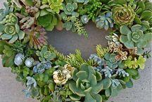 Plants/Garden and Misc