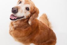 Dogs with Cancer