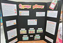 Science fair 2nd grade