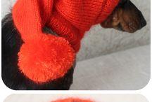 Koiran vaatteet