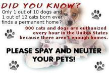 Please Spay & Neuter your pets / by Pam's Dog Academy