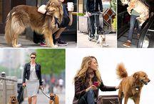 People & their pets / Biiiig love !!!!