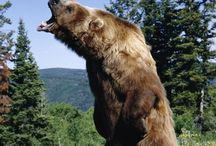 One for the road.. / Altijd weer die beren op de weg!