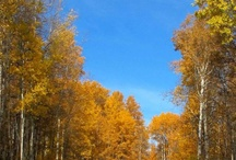Autumn pics / by Sandy Laca