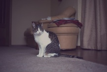 Bo / my cat Bonyfazy board