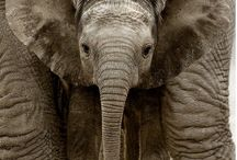 Elephants!