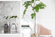 plantes à noyau