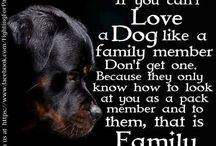 Must Love Doggies / by Cynthia Daniels