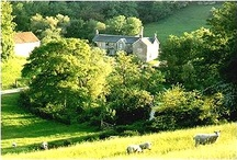 Abbotsbury and West Dorset / A glimpse of life all year round  in Abbotsbury and West Dorset