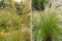 grassen/zon/evergreen