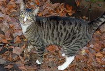 Misty's Riverside Walk / Misty is our cat. She followed us today on our riverside walk.