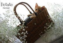 猫 Cat  kitten / かわいい猫ちゃん達♥