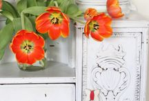 Pops of Color / by California Closets
