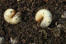 садовые вредители и борьба с ними