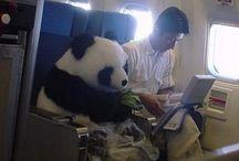 Panda pants / All things pandas
