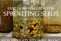 Gardening/Sprouting Edible Seeds