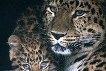 Big Cats:-)