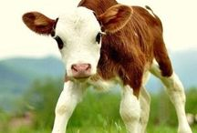 Cows are Cute! / by Sweet Grass Dairy