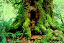 Till skogs