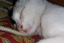 my cuttie cat