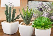succulent place card holders