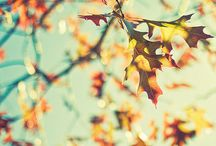 Fall :) / by Olivia Jones