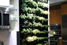Green walls indoor living