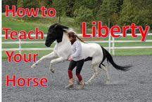 hest og trening