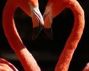 flamingos / by Karen Klingenberg