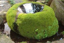 Rock Moss garden