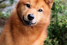 Inspirations   Pet Photography / Best Pet & Animal Images