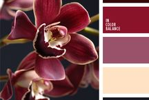 colour palettes / colour