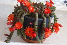 my cactus ,succulents and hoya's / my  plants (cactus + succulent + hoya )