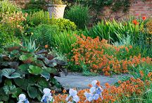 gatden lamdscape / Gardening